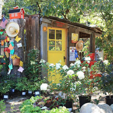 California Sister Nursery specializes in plants native to the area.