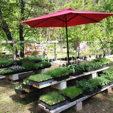"Veggie starts include a good selection of Heirloom tomatoes in 4"" pots, and annuals and perennials in job packs."